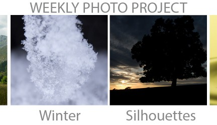 Weekly Photo Project